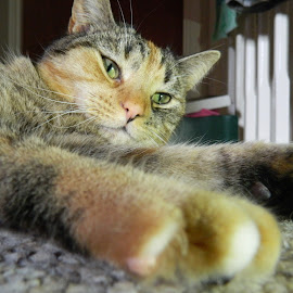 Just Chilling Out by Andrew Massey - Animals - Cats Portraits ( cats, chilling )