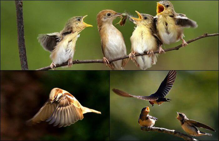 Mơ thấy chim non