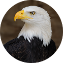 Eagle Sounds and Ringtone icon