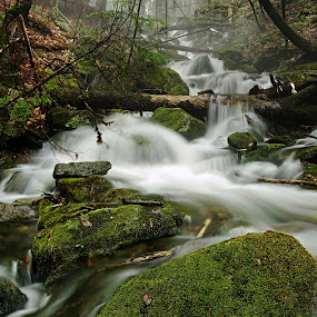 spring runoff by Rod Fewer - Landscapes Waterscapes ( spring, moss, forest, rocks, waterscape, waterfall )