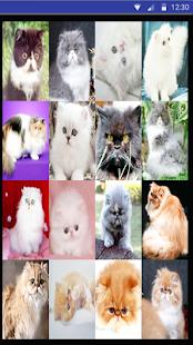 Cat Sounds – Cat Noises App - náhled