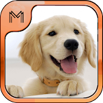 Dog Breeds Quiz HD icon