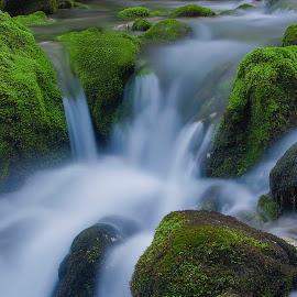 Green & white by Jože Kavčič-Joc - Nature Up Close Water