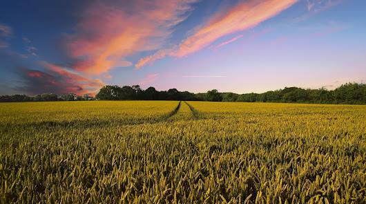 El Grupo Fertiberia es líder en el sector de los fertilizantes en la UE.