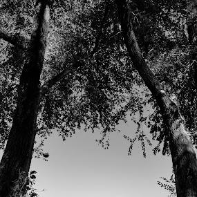 Serene Parkbench by Lauren DeJarnatt Yoder - Black & White Landscapes ( b&w, serene, park bench,  )