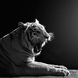 by James Harrison - Black & White Animals