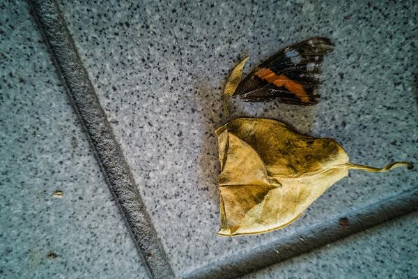 l'ala e la foglia spezzata di federicopatti