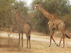 Photo: Safari time!