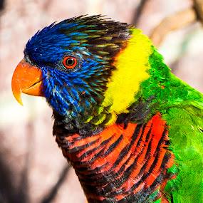 by Bill Frische - Animals Birds