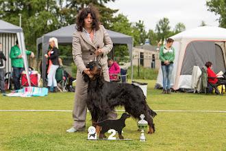 Photo: Fokkersklas reuen / Breedersclass dogs - King of the Beautiful Darkness