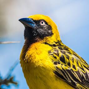 by David Barash - Animals Birds