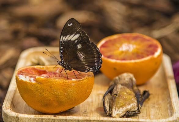 dolce arancia di PaolaPlinia