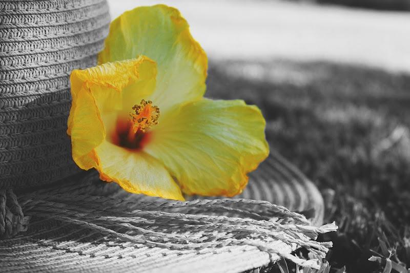 Yellow yellow  di Elianamorale