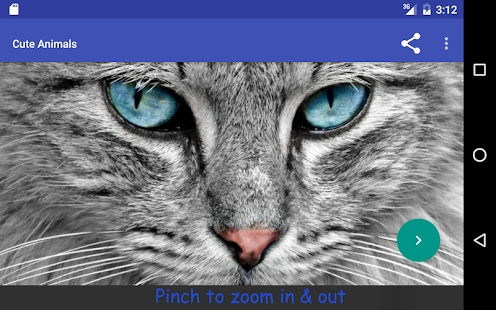 Cute Animals- screenshot thumbnail
