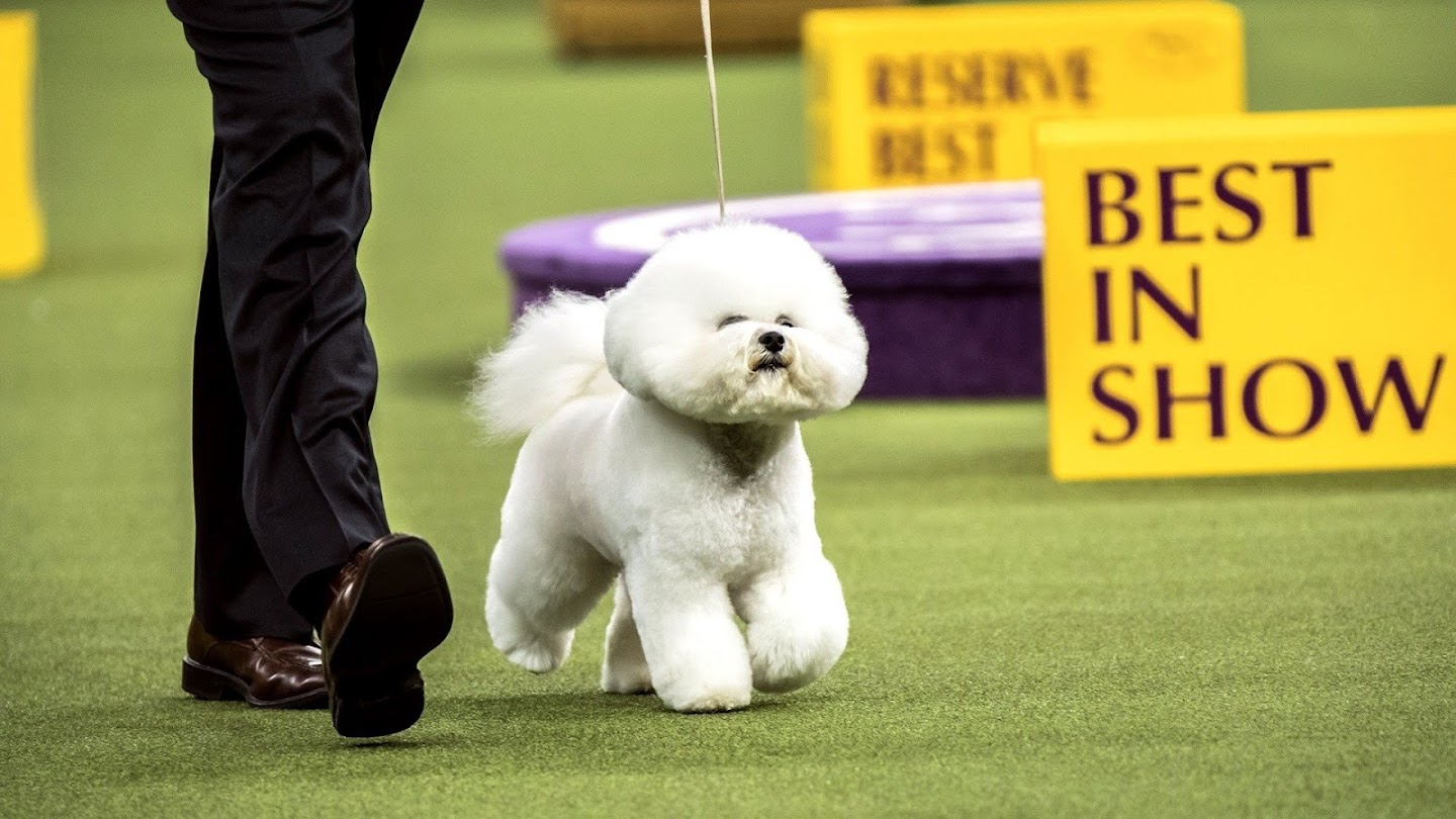 143rd Westminster Kennel Club Dog Show