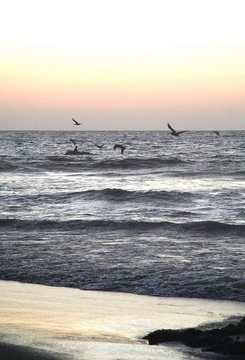 joseffa à la mer