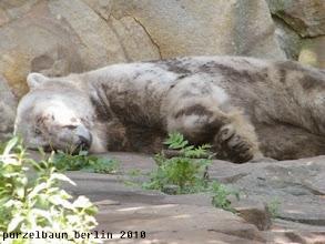 Photo: ... bevor Knut einschlaeft ;-)