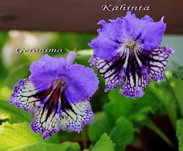 Photo: сравнение Geronimo и Kahinta