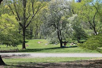 Photo: Central Park. New York