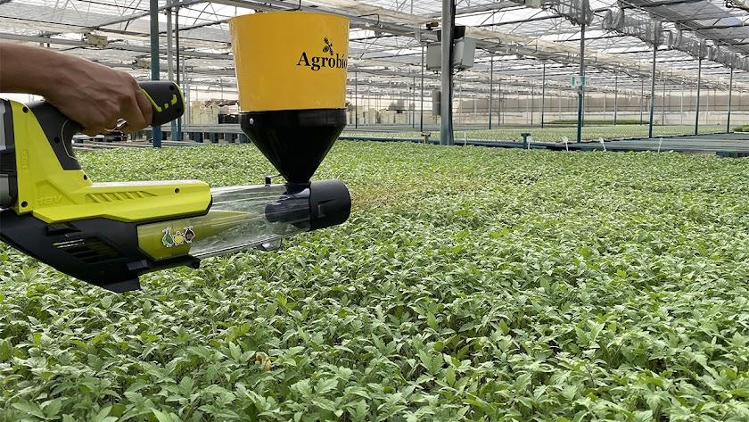 Dispositivo para la suelta de Nesidiocoris de Agrobío aplicado en semillero.