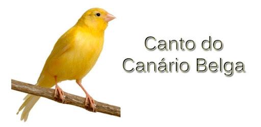 BELGAS DE CANARIOS BAIXAR PARA CANTO