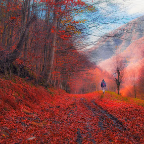 red trail by Costin Mugurel - Landscapes Forests ( tees, nature, autumn, forest, hiking )