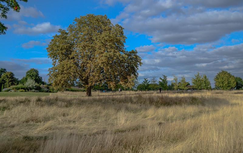 Giardini di kensington palace di vivancove84