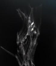 Photo: Morten Barker, Træet og projektilet (udsnit)