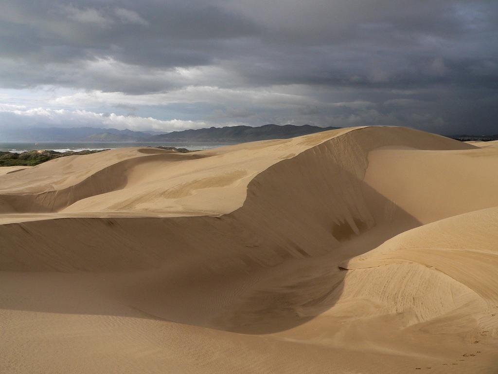 Image result for pismo dunes natural preserve