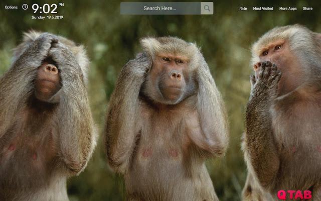 Monkey Wallpapers Hd Theme