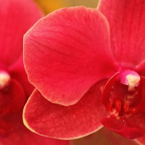 Orchids 3 by Amory Godwin Grijaldo - Novices Only Flowers & Plants