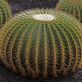 by Philips Onggowidjaja - Nature Up Close Other plants