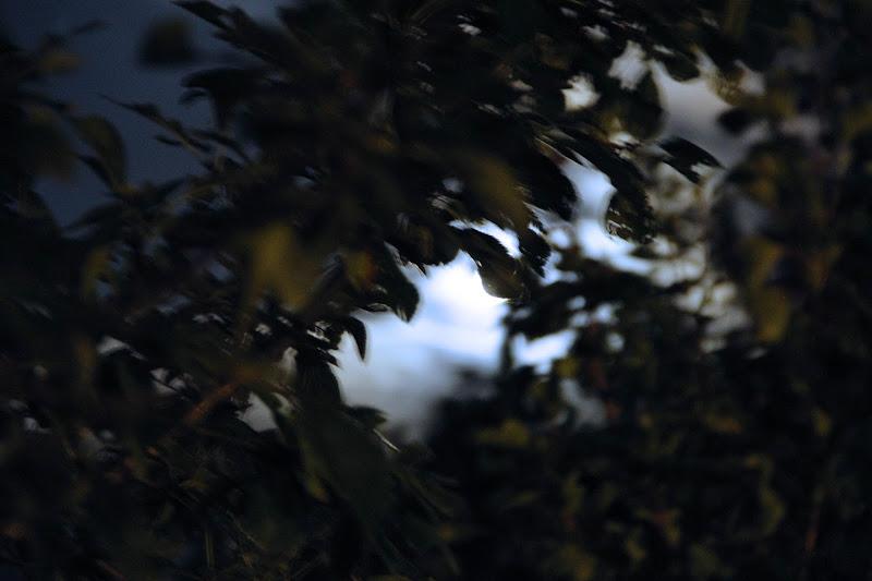 foglie sulla luna di pandora_5