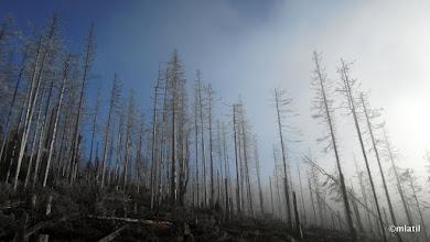 Photo: výběhz mraku pod Poledníkem