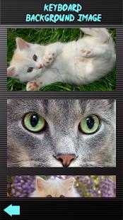Malé kotě klaviatury - náhled