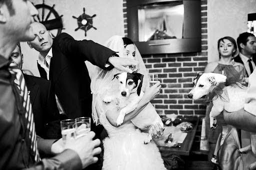 Wedding photographer Petr Wagenknecht (wagenknecht). Photo of 13.02.2014