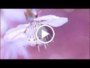 Video: Antonio Vivaldi  La Silvia (RV 734) - II I Aria [Silvia]  Quell'augellin che canta felice -