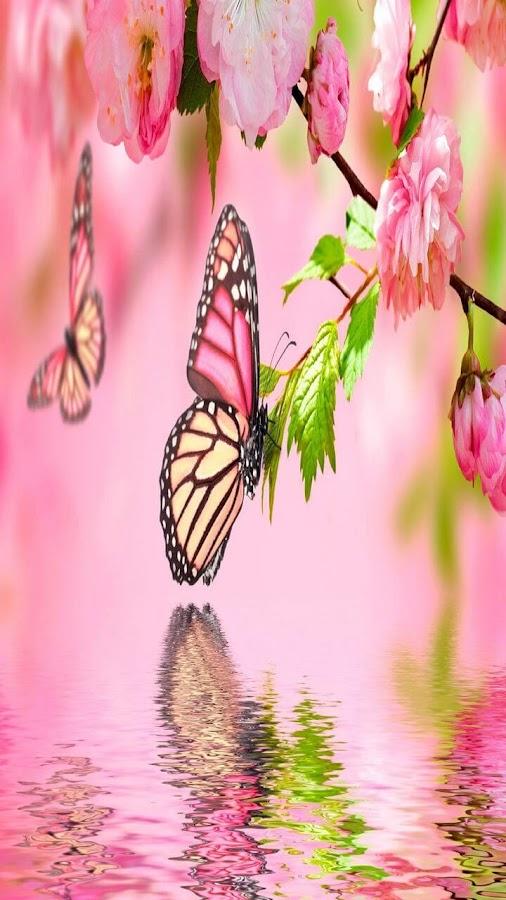 Turbo sfondi farfalle per cellulare tf52 pineglen for Immagini farfalle per desktop