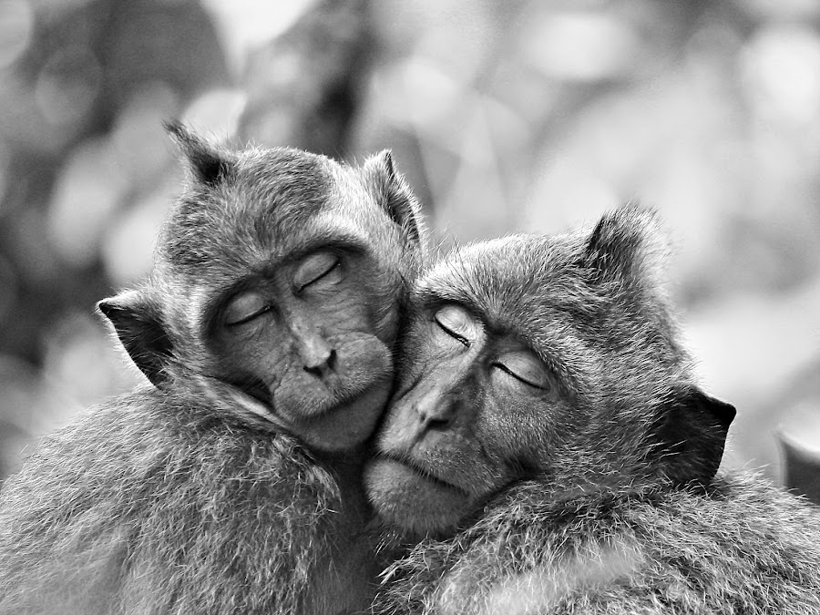 we are in Love by Agus Supriyanto - Animals Other Mammals ( nature, black and white, black and white collection, wildlife, animal )