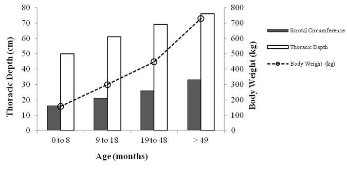 Evolution of the scrotal circumference development in buffalo bulls as a function of age, body weight, and thoracic depth (adapted from Gonçalves et al. [83]).
