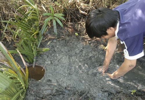 Làm hầm bắt cá vào mùa khô ở rừng U Minh Hạ 4