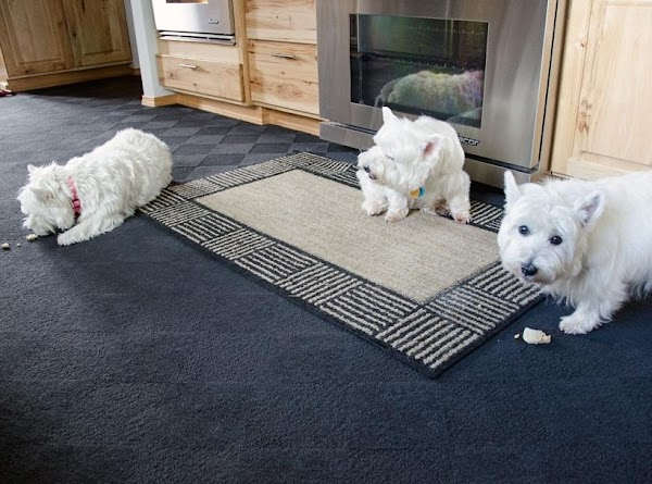 All the Westies gave a thumbs up as there was not one crumb left...