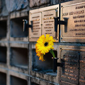 Recent flowers by Mark Luyt - City,  Street & Park  Cemeteries ( flowers, golden hour, ashes, yellow, columbarium, cemetery )