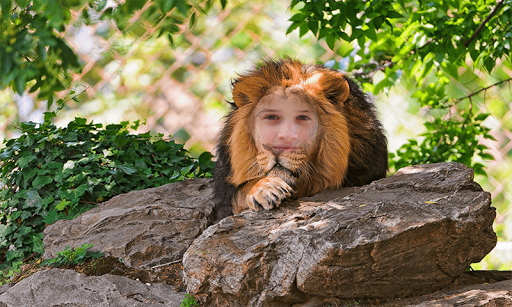 Lion Frames Photo Editor