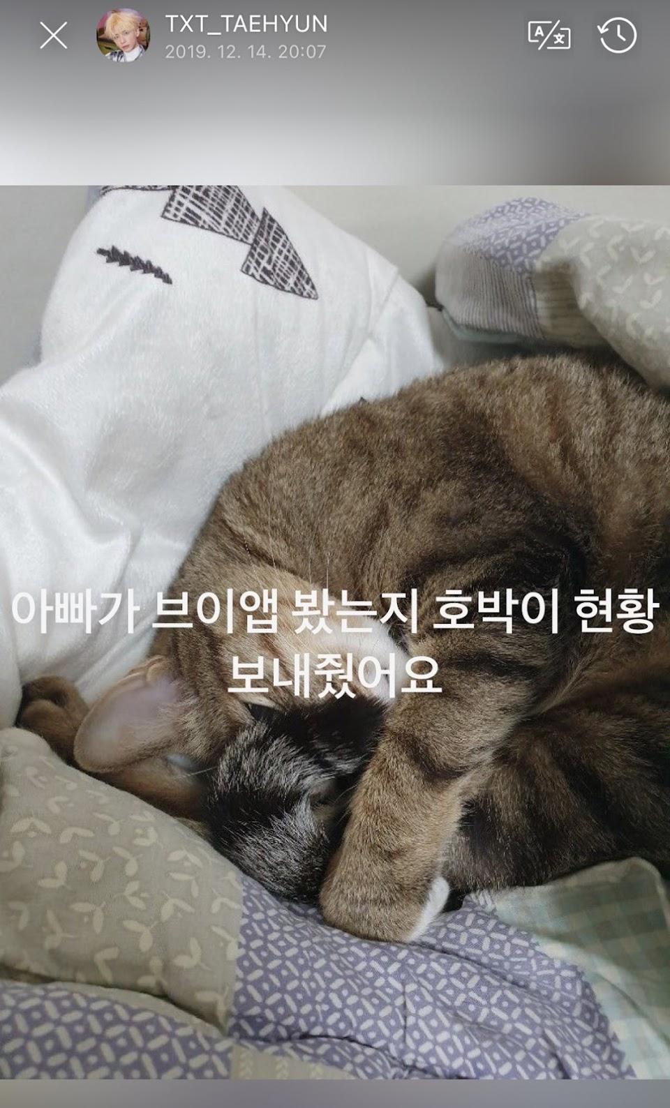 taehyun cat1