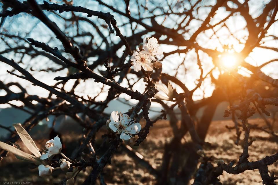 Mộc Châu – nơi những nàng tiên xuân ngự trị - ảnh 5