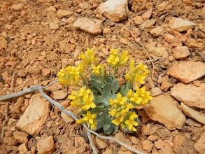 Photo: Pretty yellow flowers