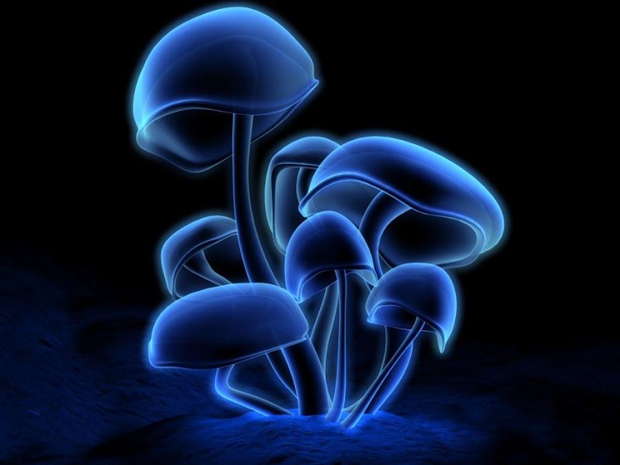 Mushroom by Arkendu Pal - Uncategorized All Uncategorized