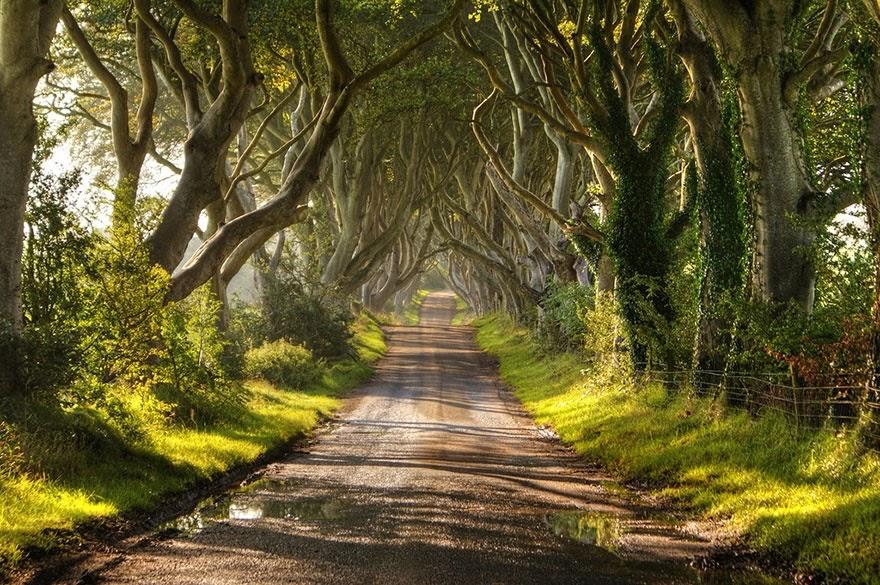 wNj4eCXrILu9qUJhsqkHBFd1BvqxbapPcy1kKOJnNR4=w880 h585 no - 16 самых эффектных деревьев мира
