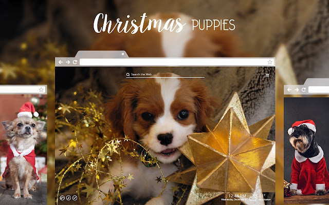 christmas puppies dog puppy hd wallpapers chrome web store